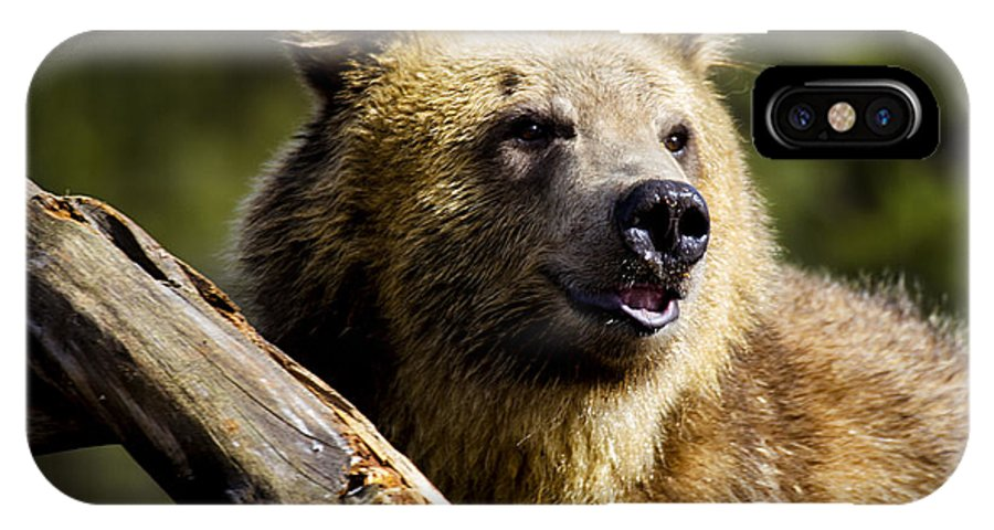 Grizzly Bear IPhone X Case featuring the photograph Smiling Griz by Carolyn Fox