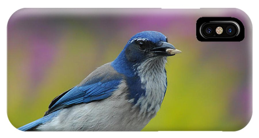 Blue Jay IPhone X Case featuring the photograph Snack Time by Donna Blackhall