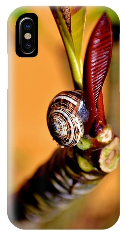 Close Up; Snail; Frangipani; Tree; Plant; Leafs; Green; Brown; Invertebrate; Spiral; Garden; Nature; Gastropod; Decorative; Background; IPhone X Case featuring the photograph Snail On Frangipani by Werner Lehmann