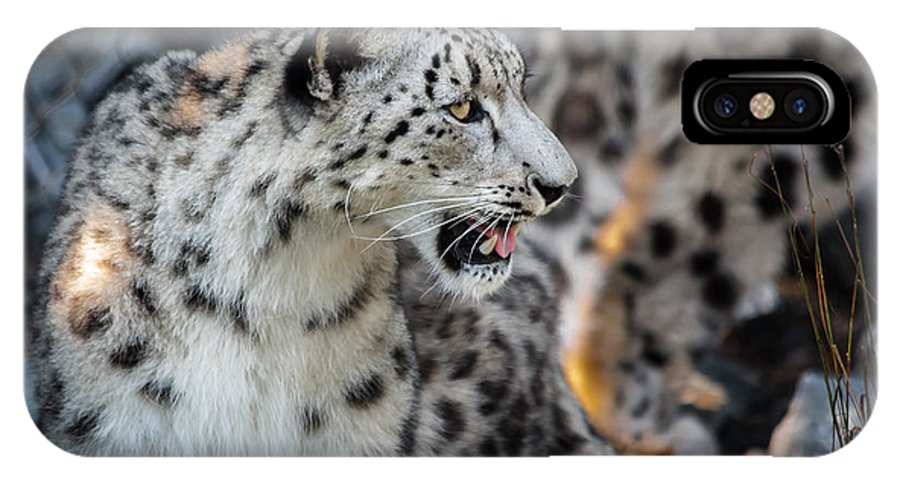 Snow IPhone X Case featuring the photograph Snow Leopards by Keith Allen