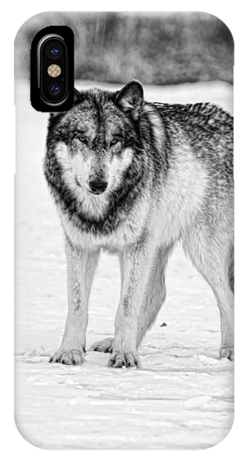 Wolf IPhone X Case featuring the photograph Snow Wolf by Shari Jardina