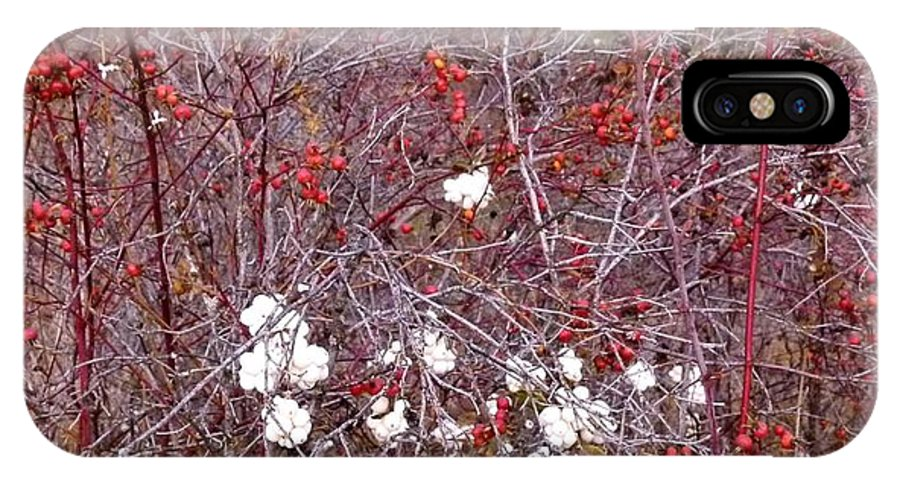 Snowberries IPhone X Case featuring the photograph Snowberries And Rosehips by Will Borden