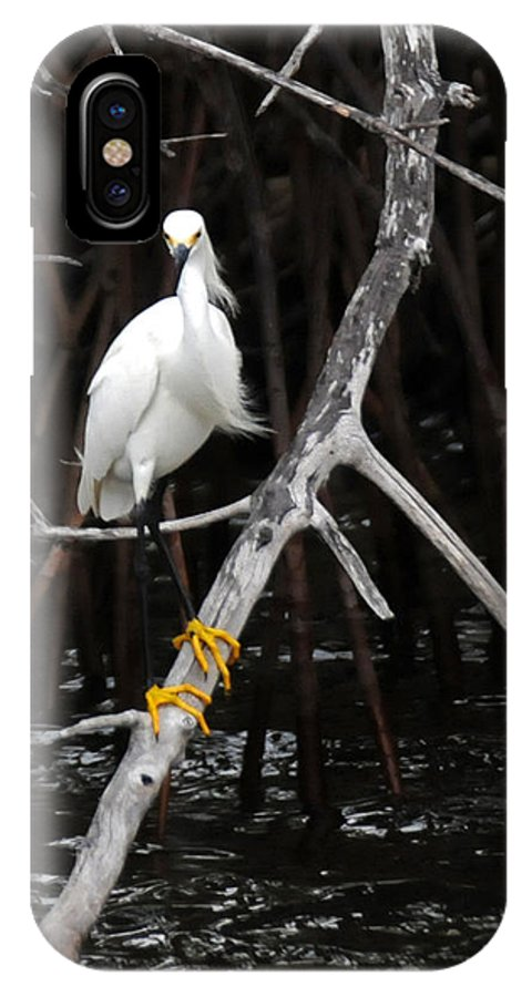 Snowy Egret IPhone X Case featuring the photograph Snowy Egret - Egretta Thula by Jonathan Whichard