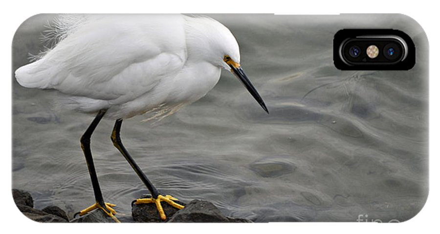 Snowy Egret IPhone X Case featuring the photograph Snowy Egret by Gwyn Newcombe