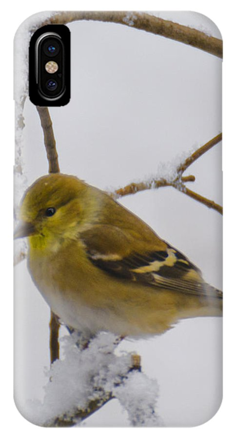 Usa IPhone X Case featuring the photograph Snowy Yellow Finch by LeeAnn McLaneGoetz McLaneGoetzStudioLLCcom