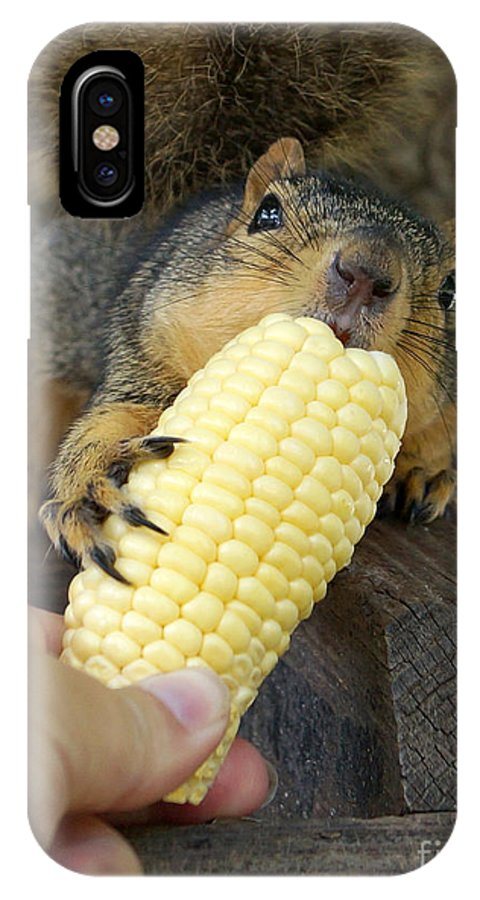Squirrel IPhone X Case featuring the photograph So Much Sweet Corn So Little Time by Lori Tordsen