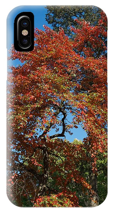 Fall IPhone X Case featuring the photograph Soaring Fall by Joseph Yarbrough