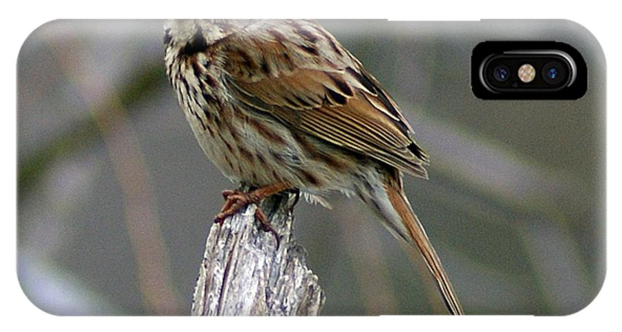 Sparrow IPhone X Case featuring the photograph Sparrow Iv by Joe Faherty