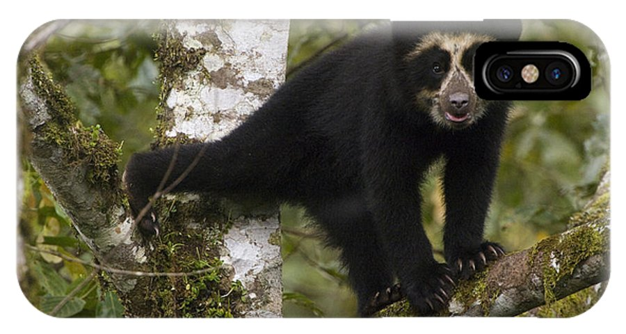 Mp IPhone X Case featuring the photograph Spectacled Bear Tremarctos Ornatus Cub by Pete Oxford