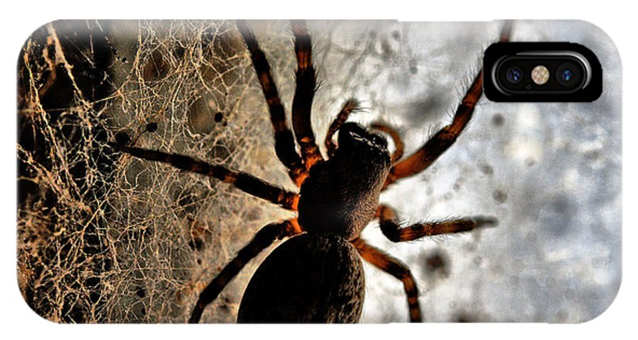 Spider IPhone X Case featuring the photograph Spiders Home by Chriss Pagani