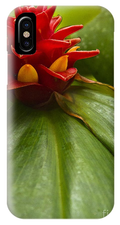 Ginger IPhone X Case featuring the photograph Spiral Ginger by Heiko Koehrer-Wagner
