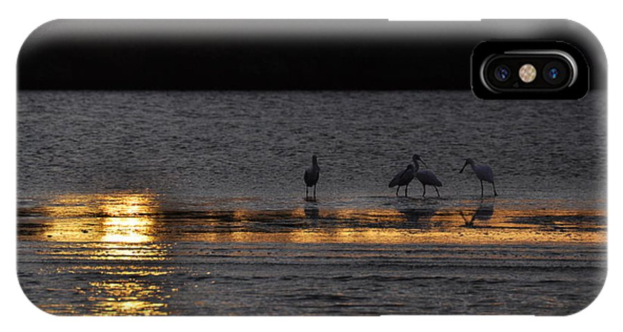 Spoonbill IPhone X Case featuring the photograph Spoonbill Gold by Rich Bodane