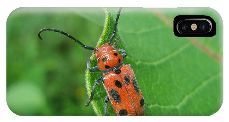 Beetle IPhone X Case featuring the photograph Spotted Asparagus Beetle - Crioceris Duodecimpunctata by Mother Nature