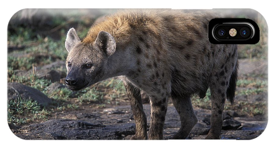 Africa IPhone X Case featuring the photograph Spotted Hyena by Sandra Bronstein