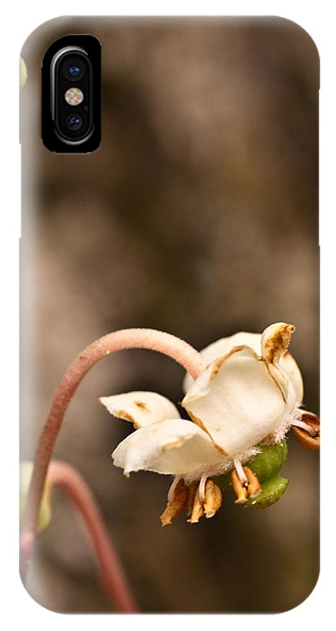 Chimaphila IPhone X Case featuring the photograph Spotted Wintergreen 1 by Douglas Barnett