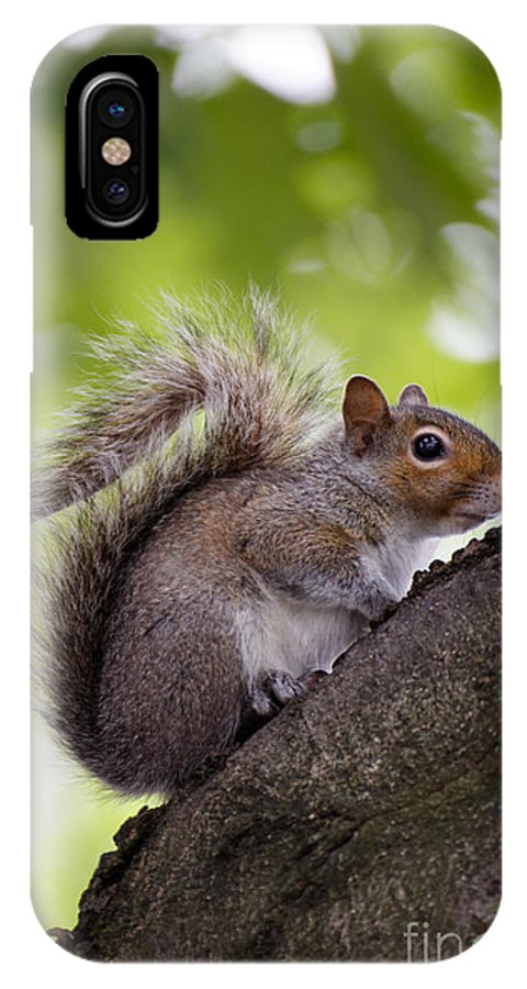 Alert IPhone X Case featuring the photograph Squirrel Before Green Leaves by Jannis Werner