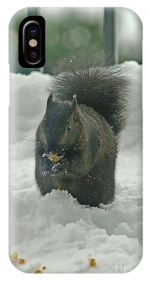 Squirrels IPhone X / XS Case featuring the photograph Squirrel In The Snow by Randy Harris