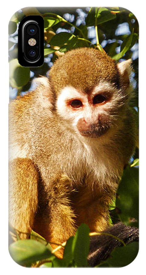 Squirrel Monkey IPhone X Case featuring the photograph Squirrel Monkey by Methune Hively