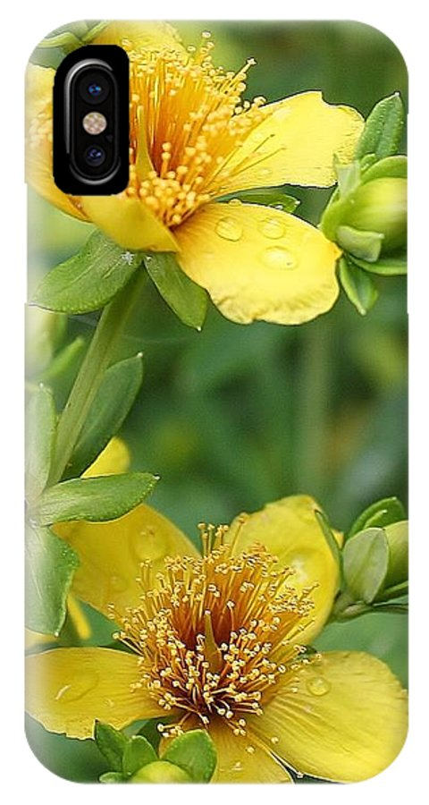 Flora IPhone X Case featuring the photograph St John's-wort by Bruce Bley