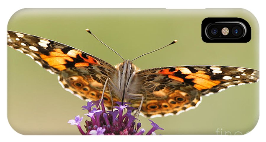 Painted Lady IPhone X Case featuring the photograph Stained Glass Lady by Robert E Alter Reflections of Infinity