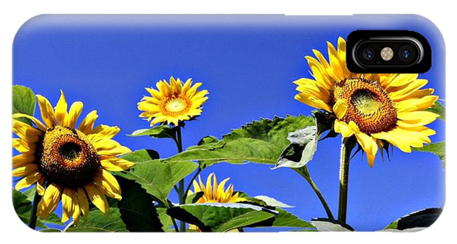 Sunflower IPhone X Case featuring the photograph Standing Proud by Erin Rosenblum