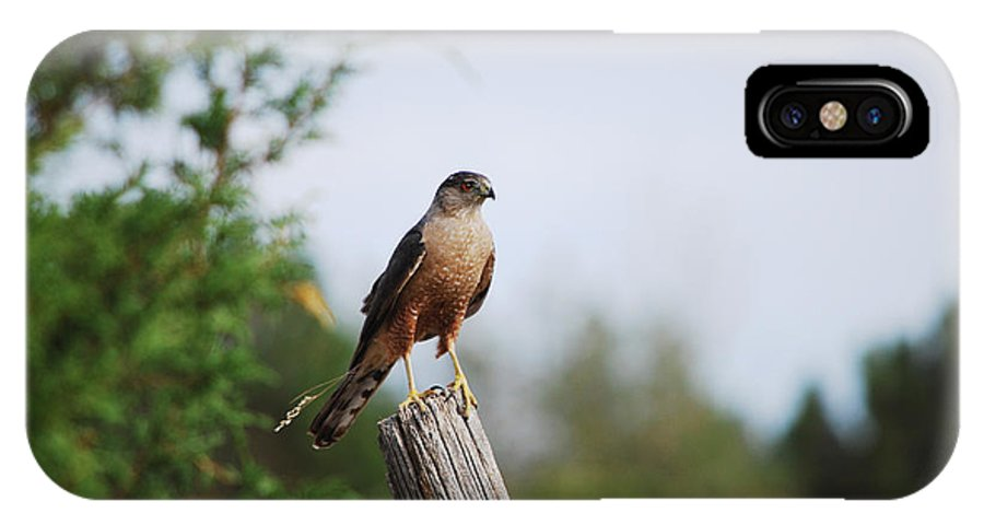 Falcon IPhone X Case featuring the photograph Standing Watch by Sheryl Cox