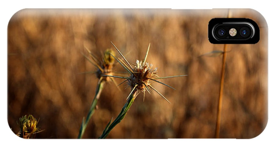 Close-up IPhone X Case featuring the photograph Star Thistle by Leonard Sharp