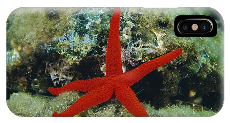 Echinaster Sepositus IPhone X Case featuring the photograph Starfish by Alexis Rosenfeld