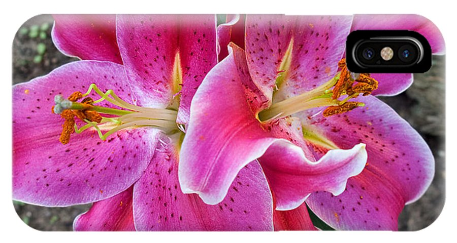 Lily IPhone X Case featuring the photograph Stargazer by Terry Doyle