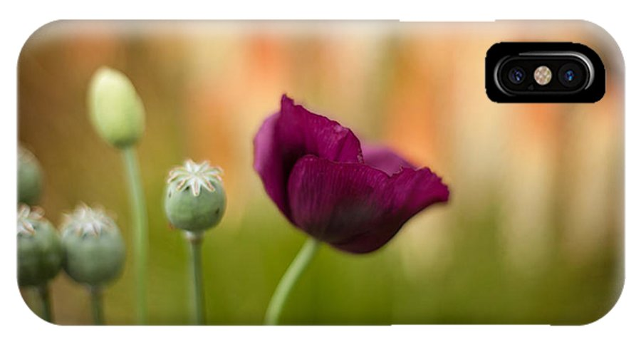 Flower IPhone X / XS Case featuring the photograph Stark Poppies by Mike Reid