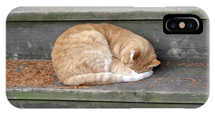 Cat IPhone X Case featuring the photograph Step Sleeper by Living Color Photography Lorraine Lynch