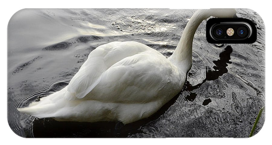 Swan IPhone X Case featuring the photograph Still Waters Run Deep by Bob Christopher