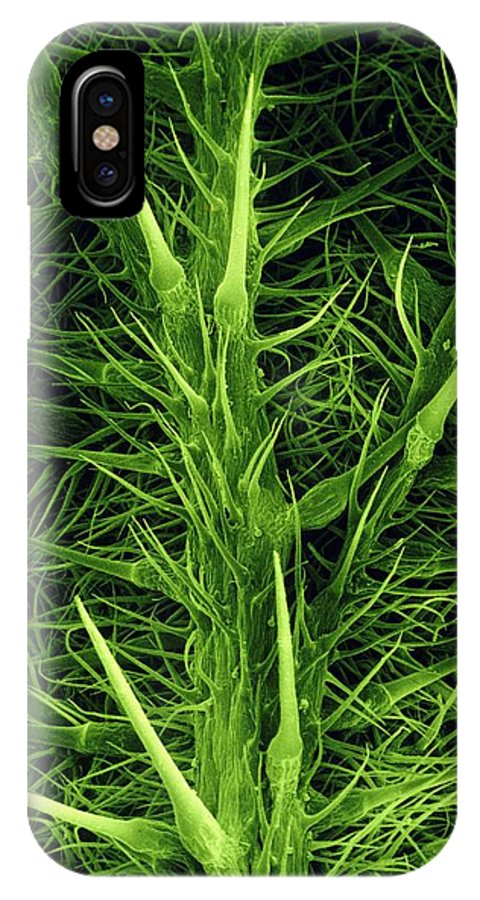 Stinging Nettle IPhone X Case featuring the photograph Stinging Hairs On A Nettle Leaf by Dr Jeremy Burgess.