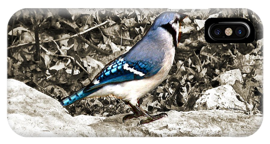 Stone Blue Jay IPhone X Case featuring the photograph Stone Blue Jay by Debra   Vatalaro