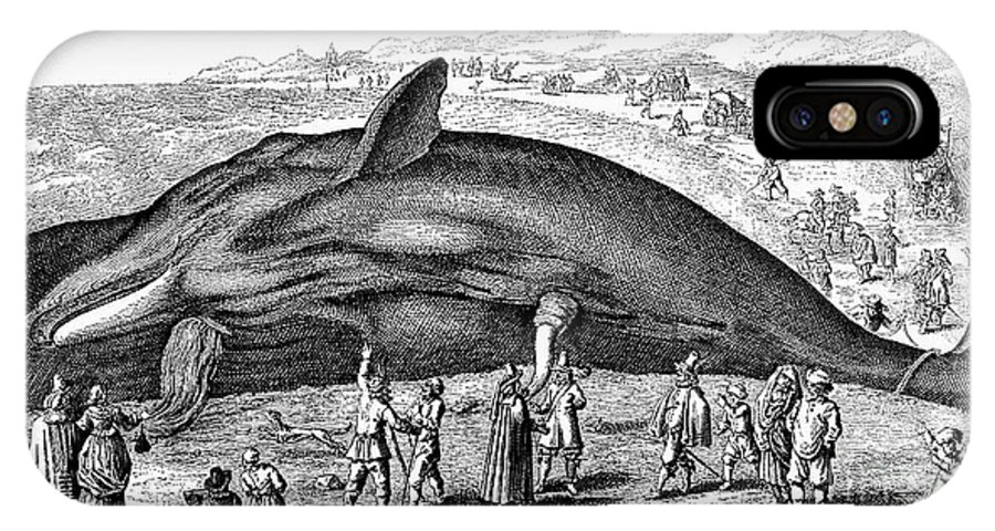 1577 IPhone X Case featuring the photograph Stranded Whale, 1577 by Granger