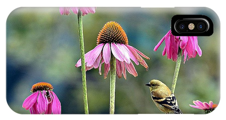 Coneflower IPhone X Case featuring the photograph Strategic Landing by Fraida Gutovich