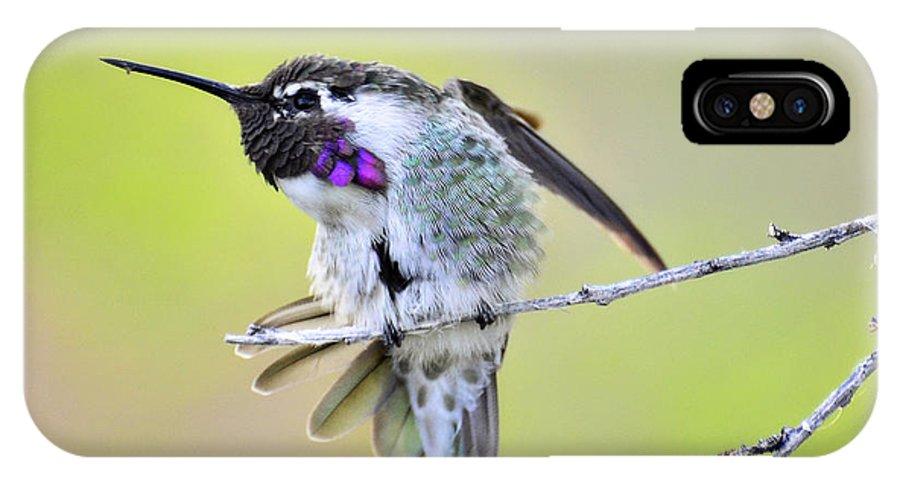 Costa's Hummingbird IPhone X Case featuring the photograph Stretch by Saija Lehtonen