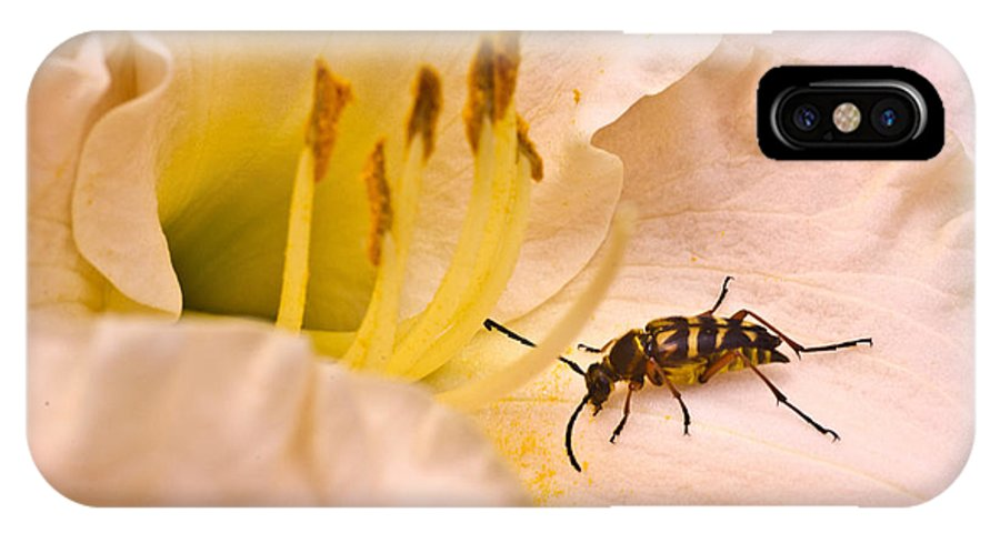 IPhone X Case featuring the photograph Striped Beetle On Lilly 1 by Douglas Barnett