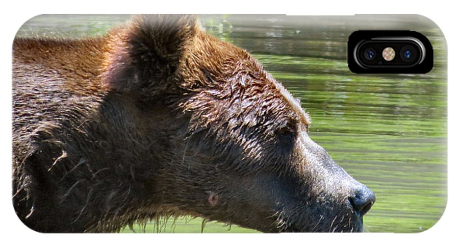 Bear IPhone X Case featuring the photograph Strong Profile by Art Dingo