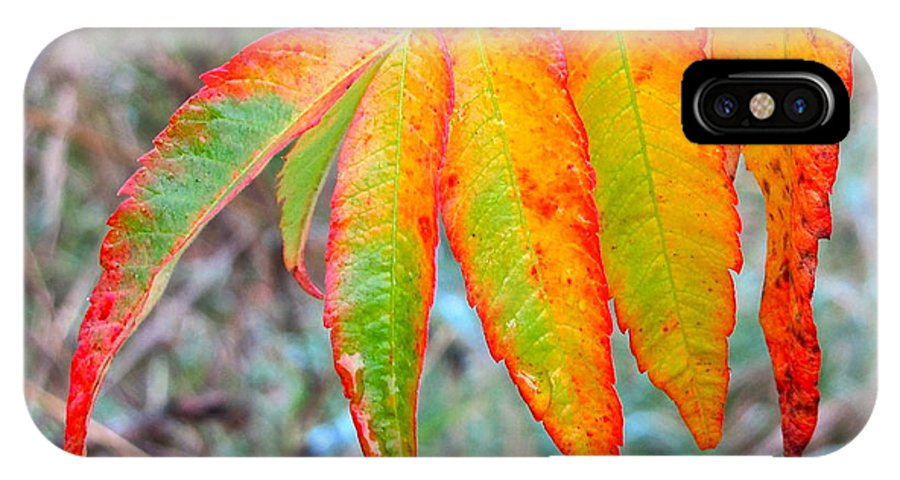 Photography IPhone X / XS Case featuring the photograph Sumac Leaves After The Rainfall by Sean Griffin