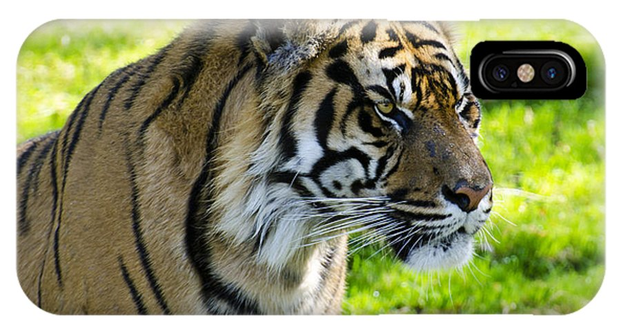 Sumatran Tiger IPhone X / XS Case featuring the photograph Sumatran Tiger Portrait by Saija Lehtonen