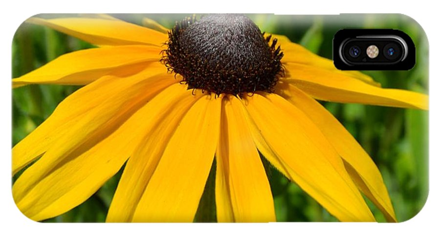 Summer IPhone X Case featuring the photograph Summer Black Eyed Susan Flower by P S