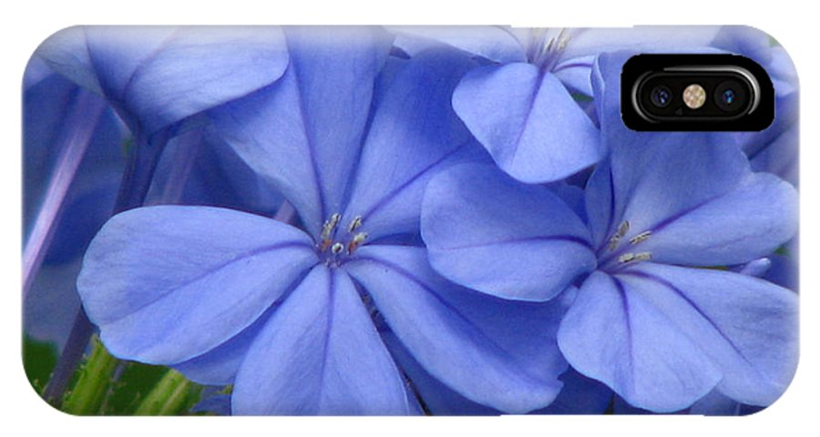 Flower IPhone X Case featuring the photograph Summer Blues by Paul Slebodnick
