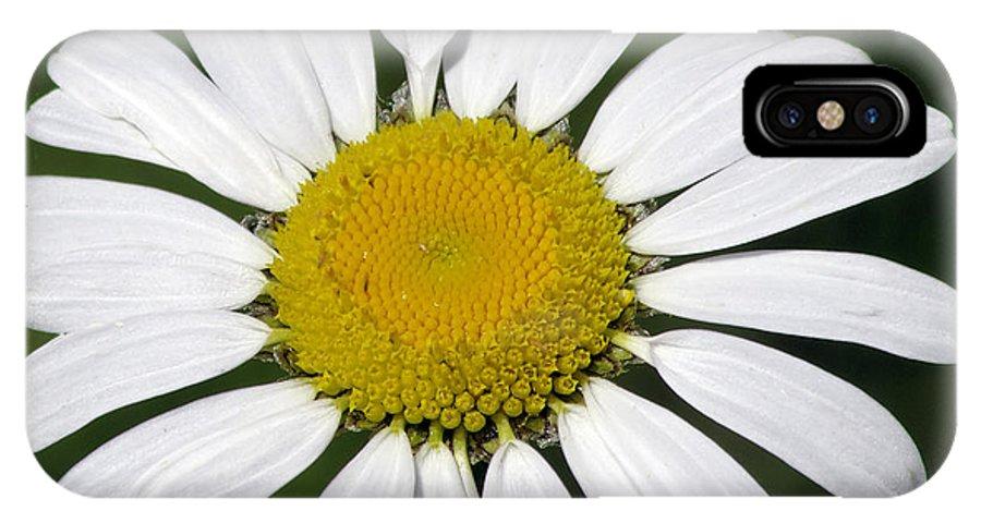 Usa IPhone X Case featuring the photograph Summer Daisy by LeeAnn McLaneGoetz McLaneGoetzStudioLLCcom