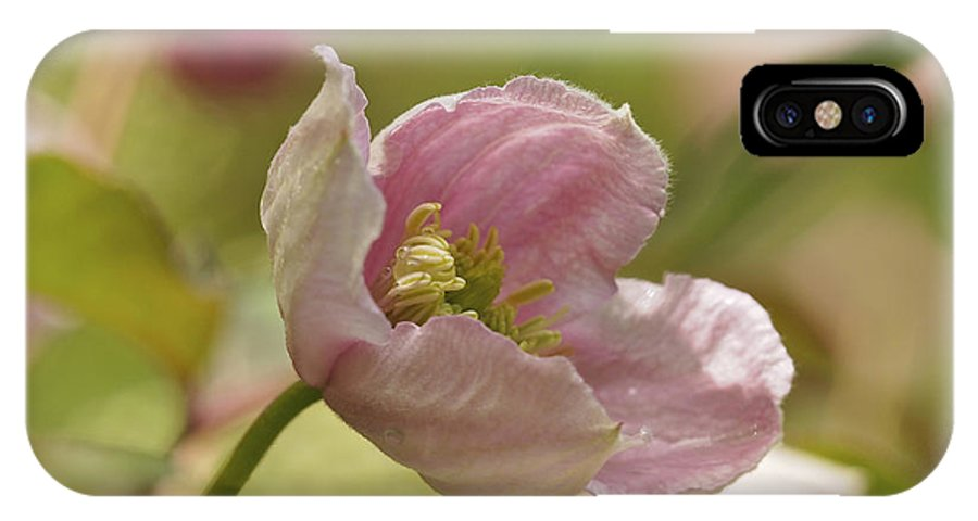 Clematis IPhone X Case featuring the photograph Summer In Pink by Cheryl Butler