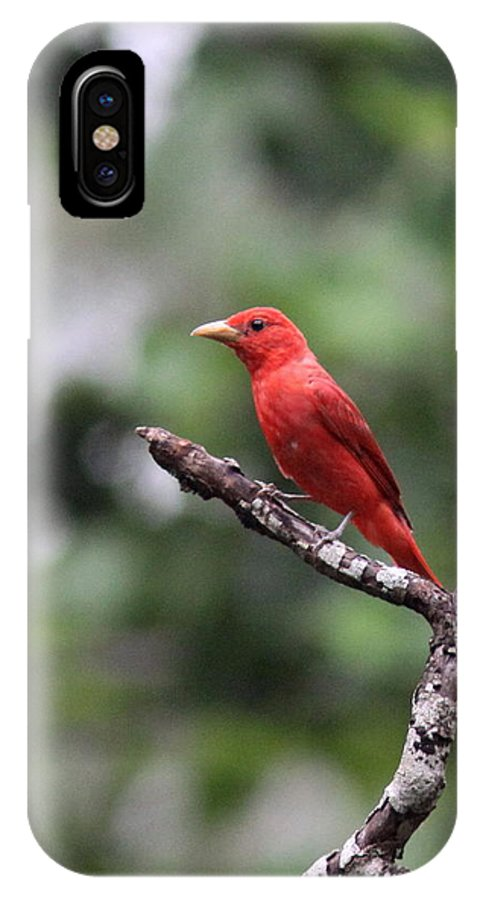Summer Tanager IPhone X Case featuring the photograph Summer Tanager by Travis Truelove