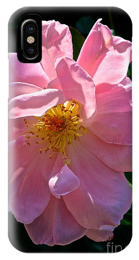 Outdoors IPhone X Case featuring the photograph Summer Waltz by Susan Herber