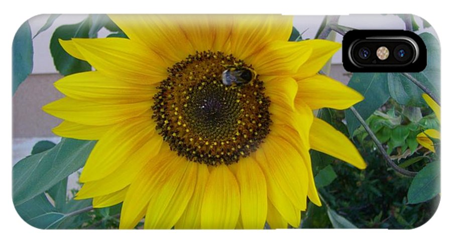 Sunflower IPhone X Case featuring the photograph Sunflower 1 by Michael Puya