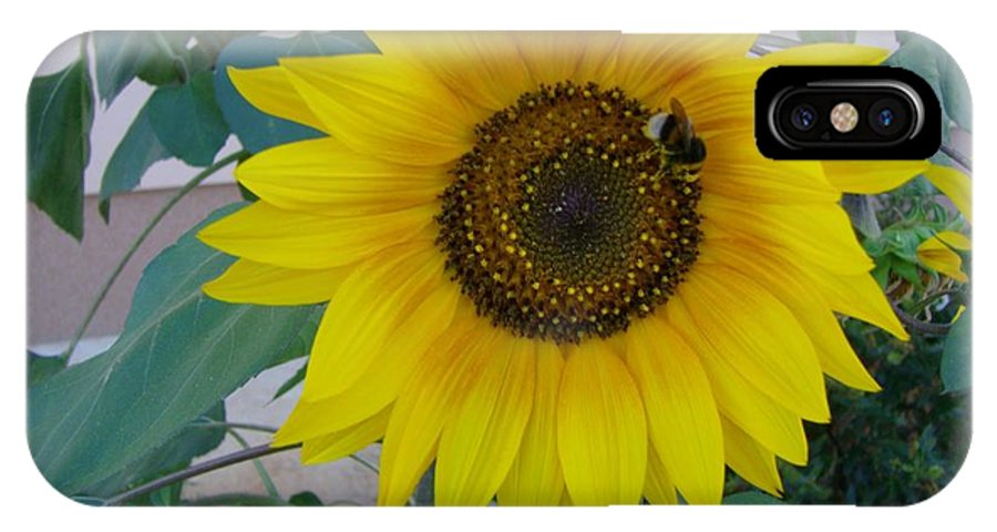 Sunflower IPhone X Case featuring the photograph Sunflower 2 by Michael Puya