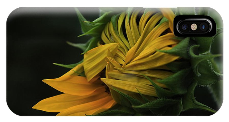 Sun IPhone X Case featuring the photograph Sunflower 2012 by Marjorie Imbeau